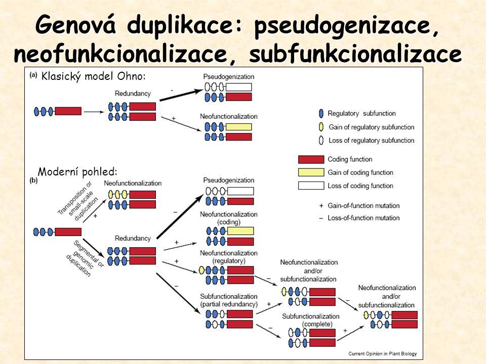 Genová duplikace: pseudogenizace, neofunkcionalizace, subfunkcionalizace