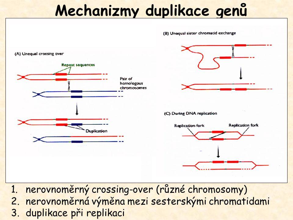 Mechanizmy duplikace genů
