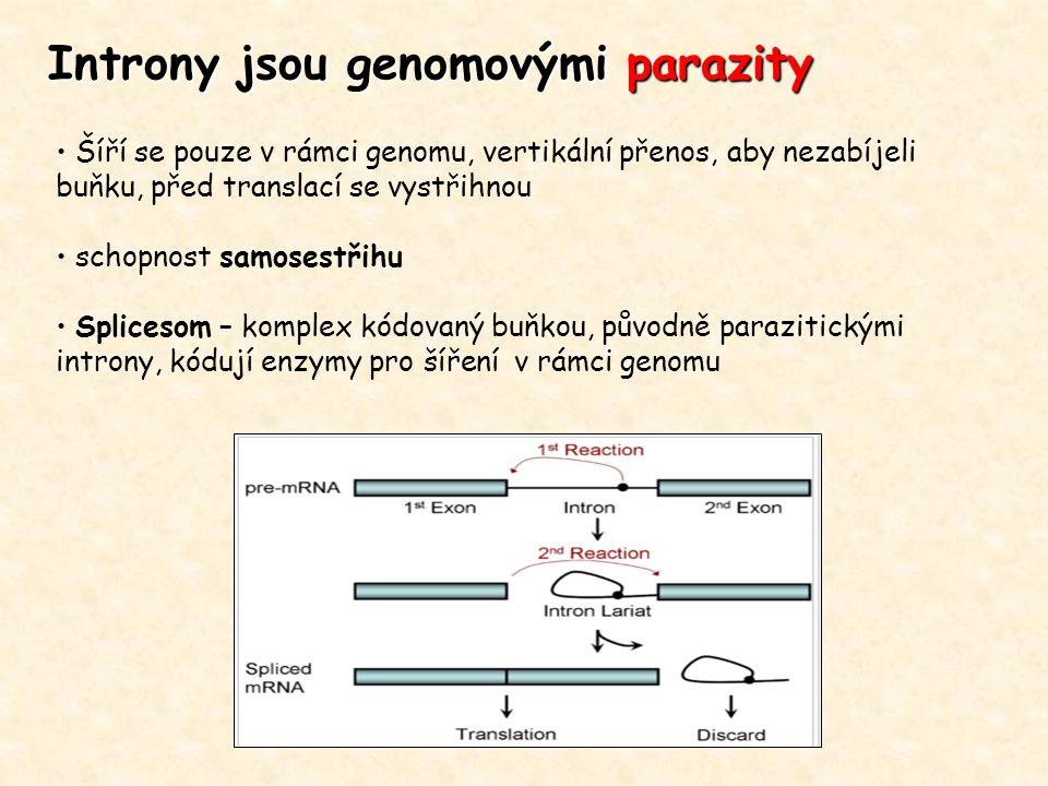 Introny jsou genomovými parazity