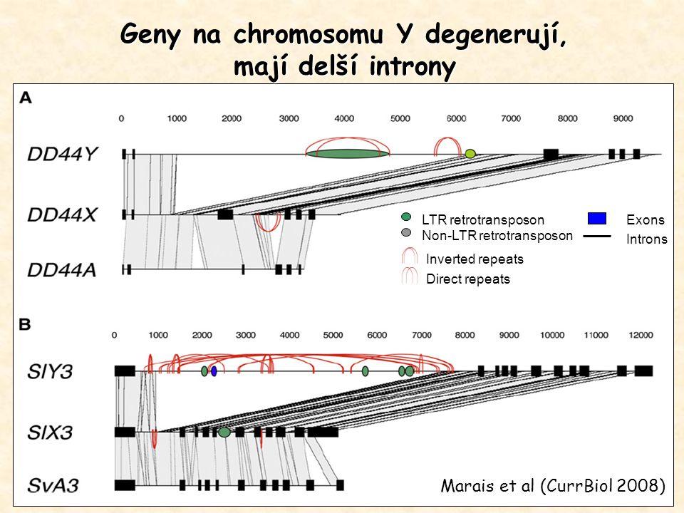 Geny na chromosomu Y degenerují,