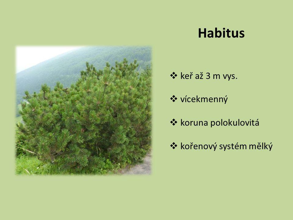 Habitus keř až 3 m vys. vícekmenný koruna polokulovitá