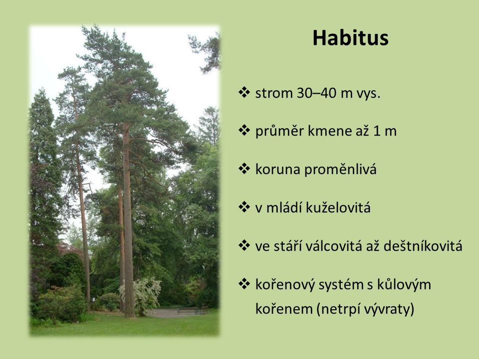 Habitus strom 30–40 m vys. průměr kmene až 1 m koruna proměnlivá