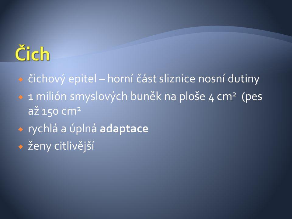Čich čichový epitel – horní část sliznice nosní dutiny