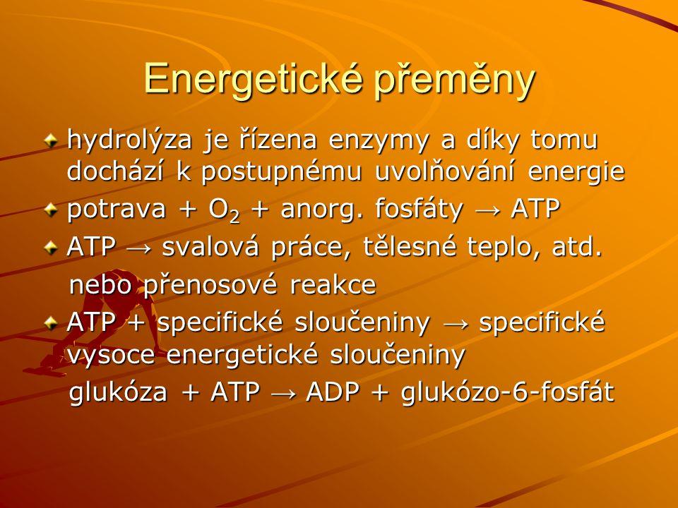 Energetické přeměny hydrolýza je řízena enzymy a díky tomu dochází k postupnému uvolňování energie.