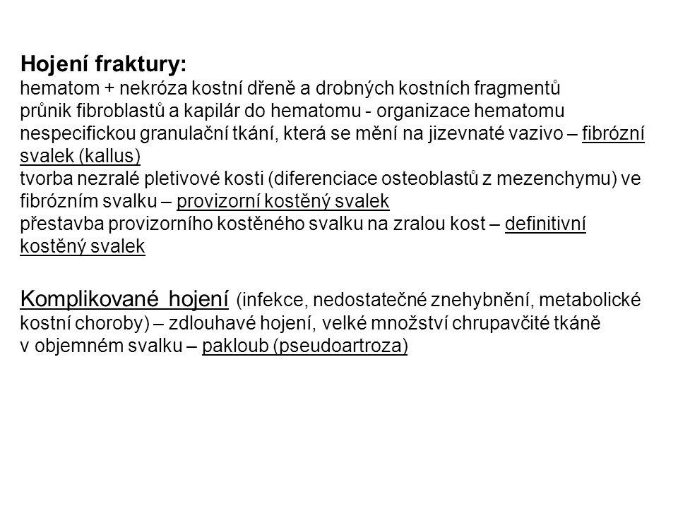 Hojení fraktury: hematom + nekróza kostní dřeně a drobných kostních fragmentů.
