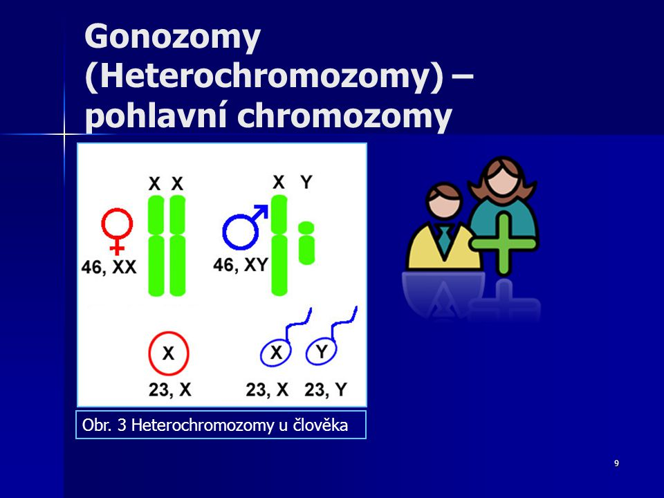 Gonozomy (Heterochromozomy) – pohlavní chromozomy