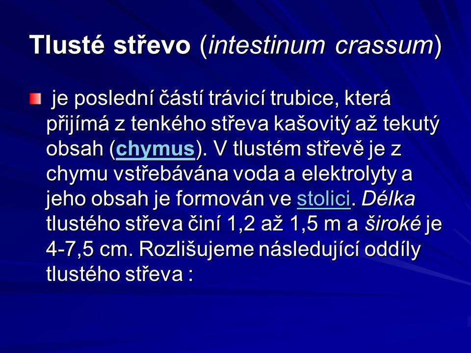 Tlusté střevo (intestinum crassum)