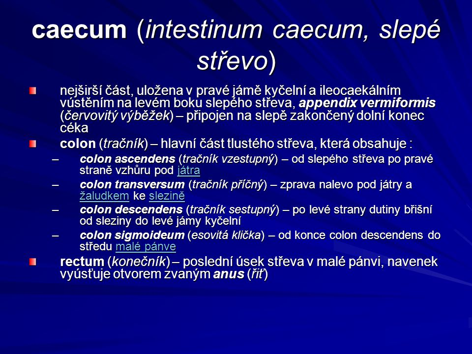 caecum (intestinum caecum, slepé střevo)
