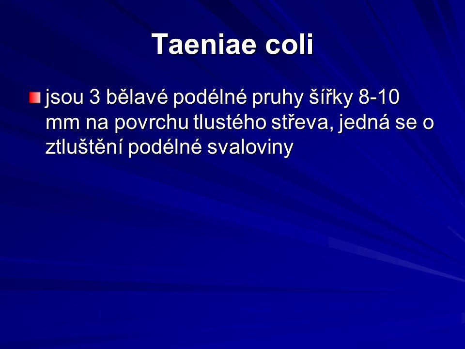 Taeniae coli jsou 3 bělavé podélné pruhy šířky 8-10 mm na povrchu tlustého střeva, jedná se o ztluštění podélné svaloviny.