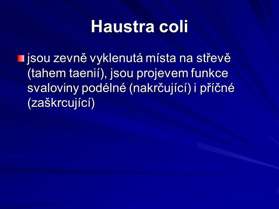 Haustra coli jsou zevně vyklenutá místa na střevě (tahem taenií), jsou projevem funkce svaloviny podélné (nakrčující) i příčné (zaškrcující)
