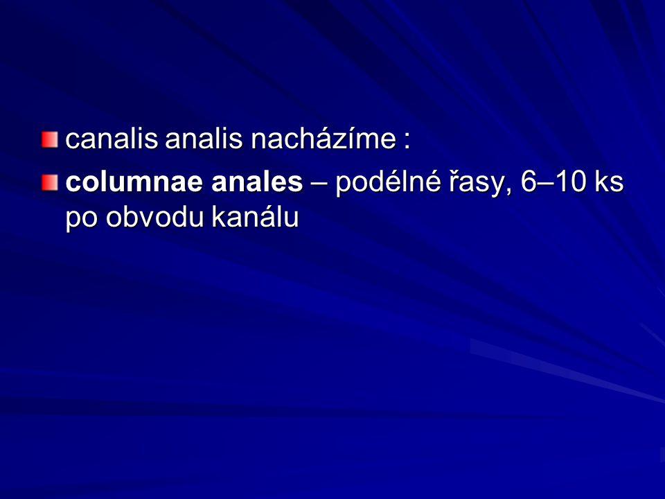canalis analis nacházíme :