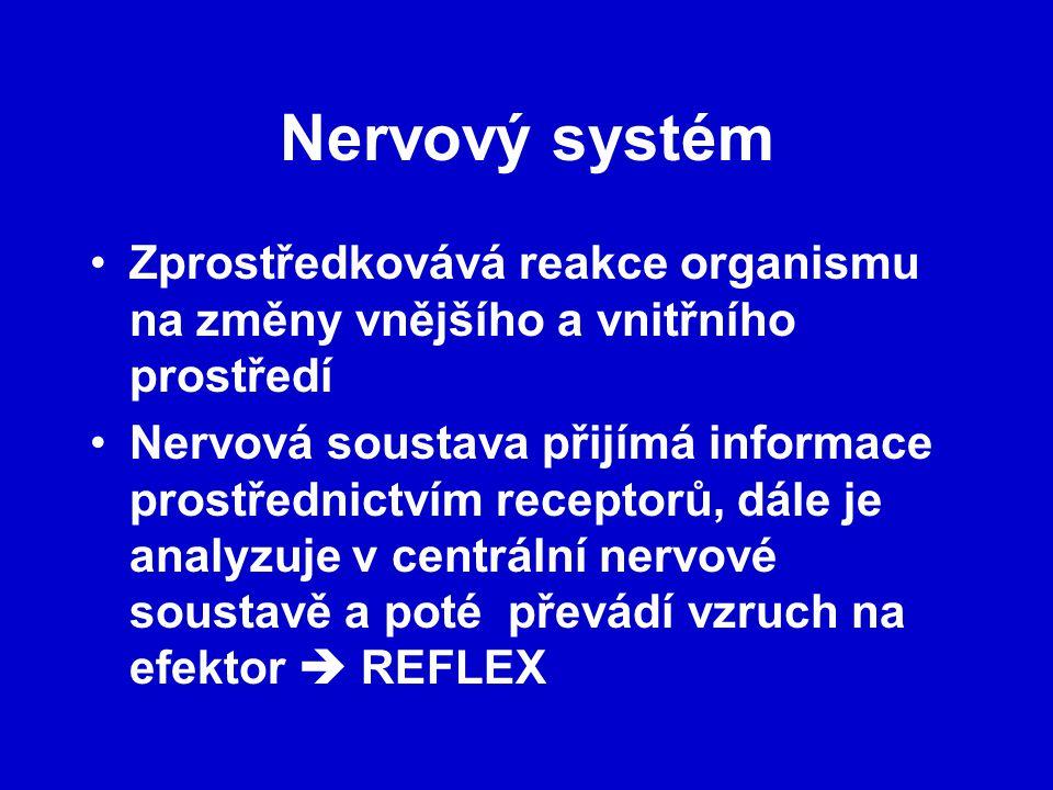Nervový systém Zprostředkovává reakce organismu na změny vnějšího a vnitřního prostředí.
