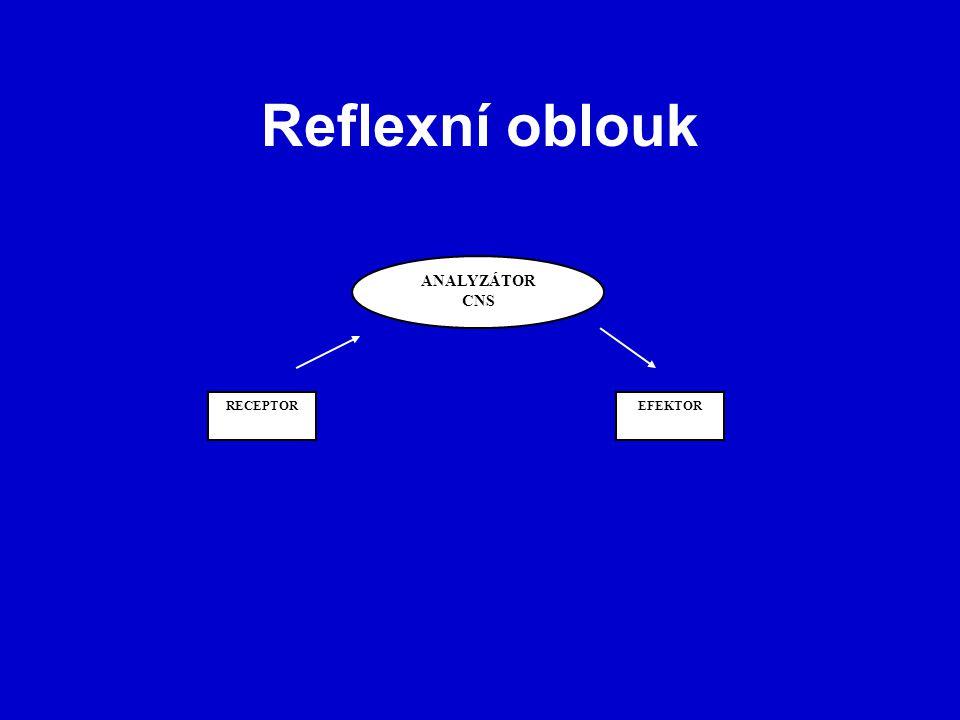 Reflexní oblouk ANALYZÁTOR CNS RECEPTOR EFEKTOR