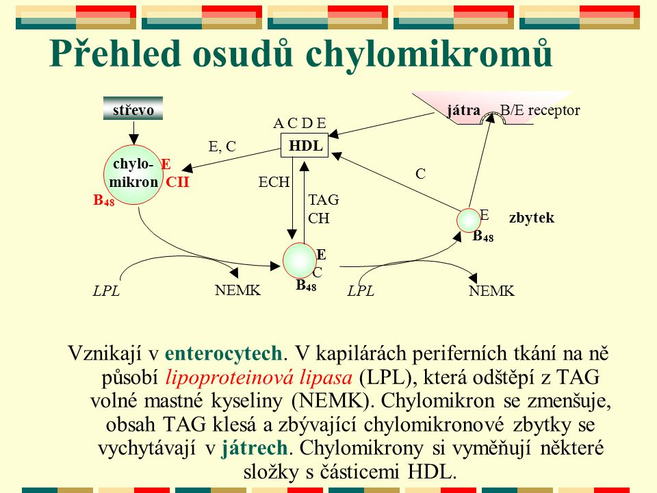 Přehled osudů chylomikromů