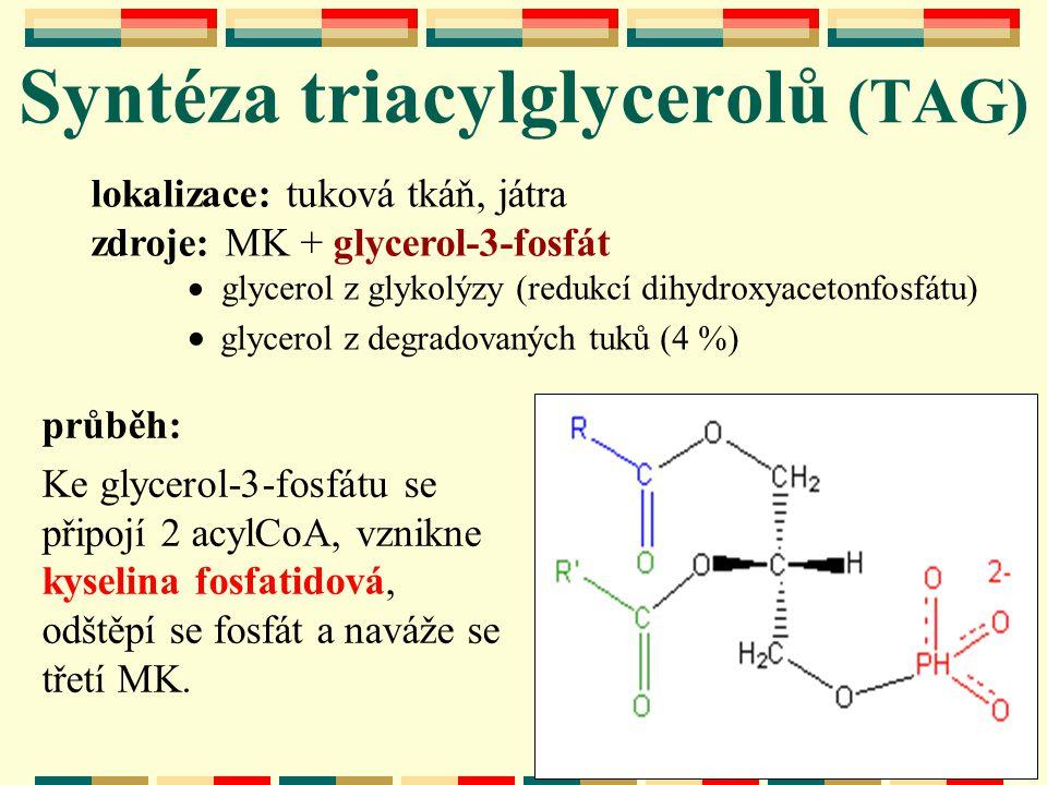 Syntéza triacylglycerolů (TAG)