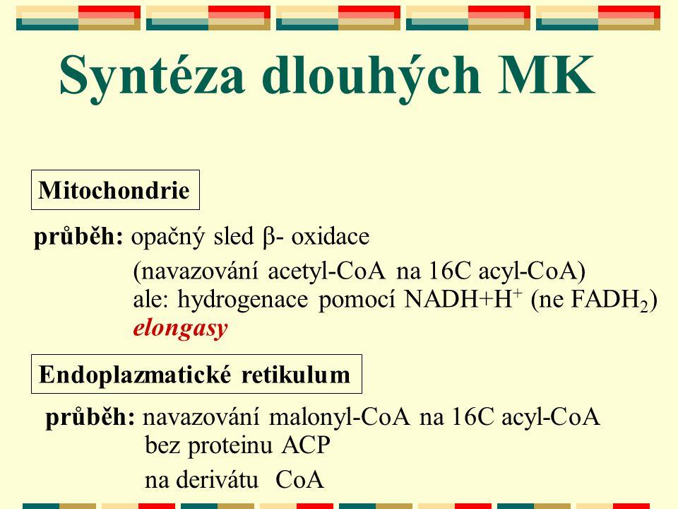 Syntéza dlouhých MK Mitochondrie průběh: opačný sled β- oxidace