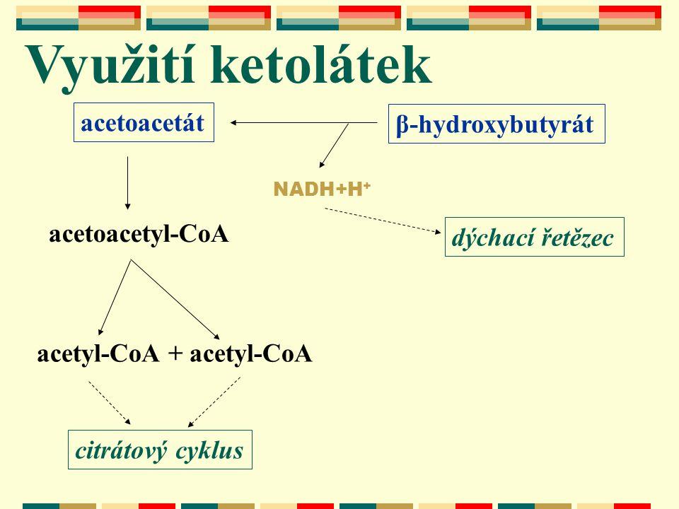 Využití ketolátek acetoacetát β-hydroxybutyrát acetoacetyl-CoA