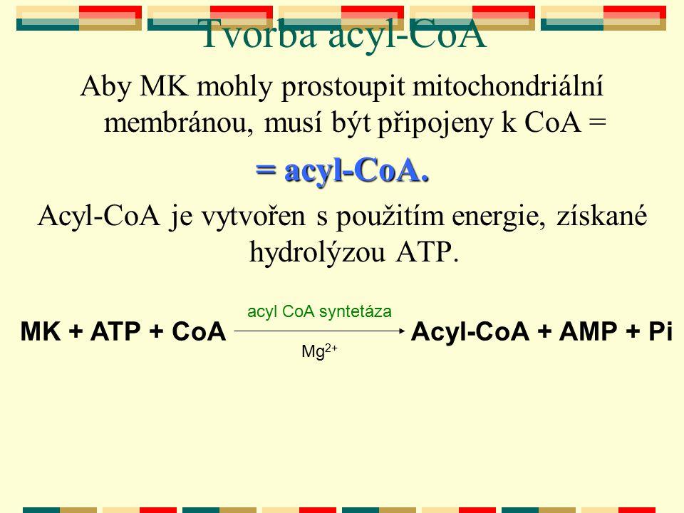 Acyl-CoA je vytvořen s použitím energie, získané hydrolýzou ATP.