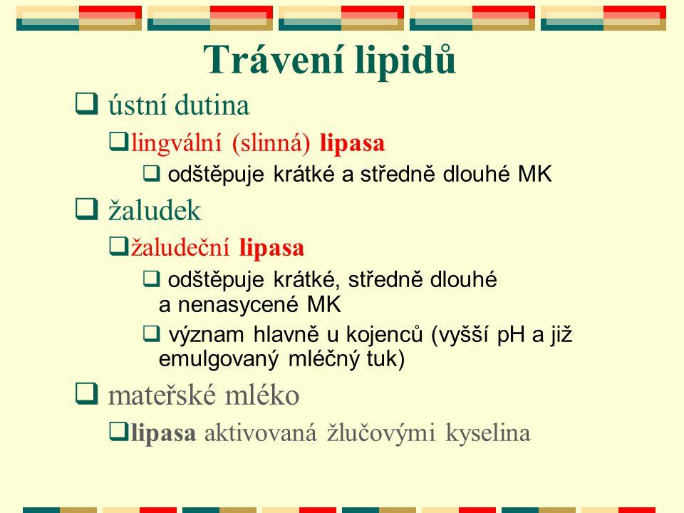 Trávení lipidů ústní dutina žaludek mateřské mléko