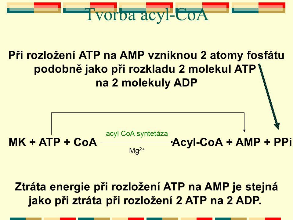 Tvorba acyl-CoA Při rozložení ATP na AMP vzniknou 2 atomy fosfátu
