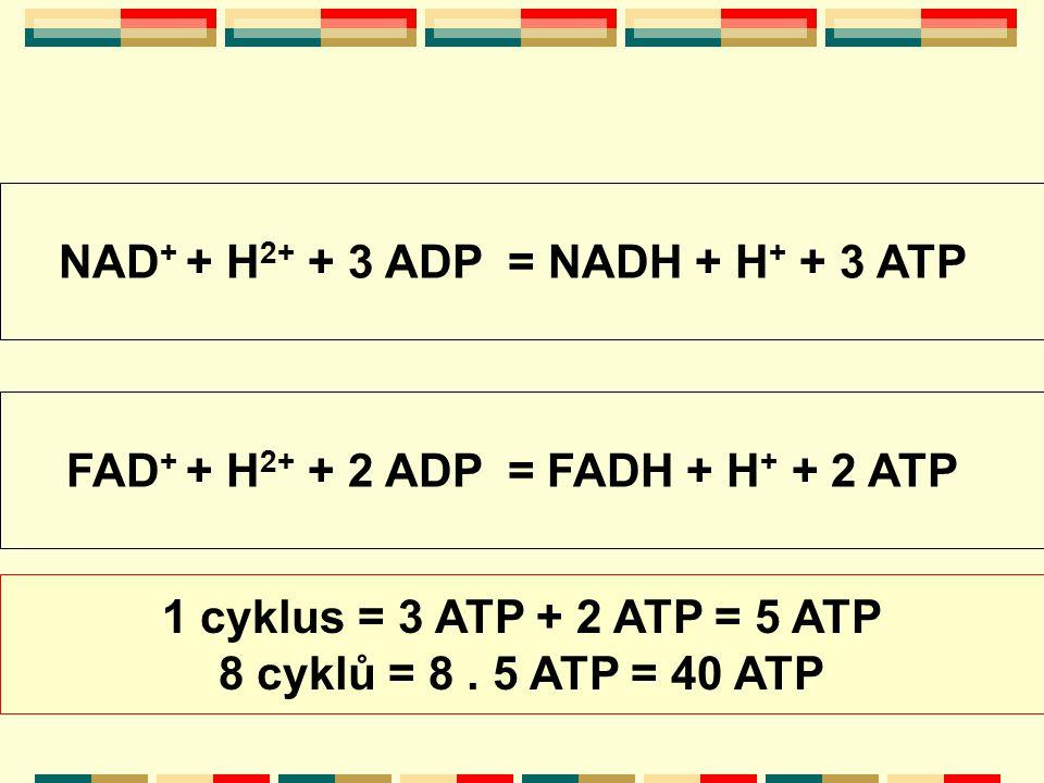 NAD+ + H2+ + 3 ADP = NADH + H+ + 3 ATP
