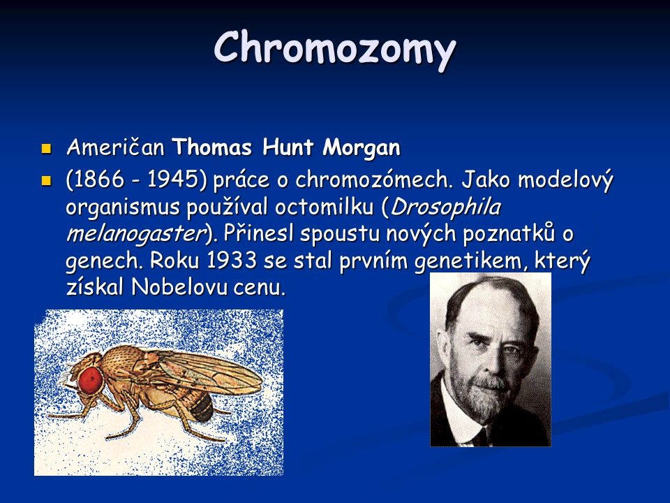 Chromozomy Američan Thomas Hunt Morgan