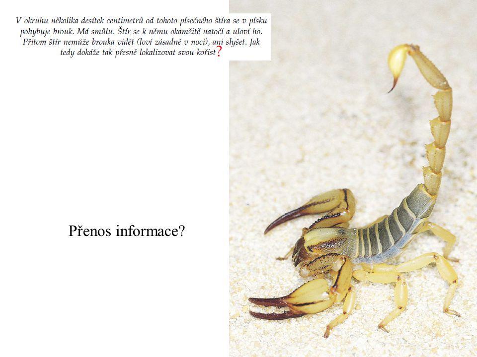 Přenos informace
