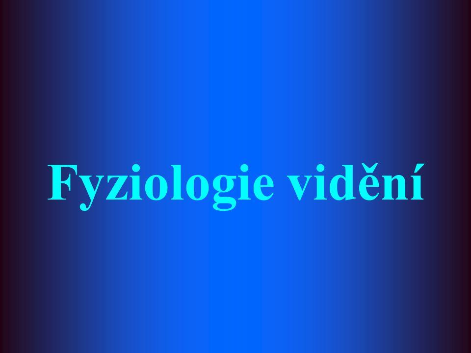 Fyziologie vidění