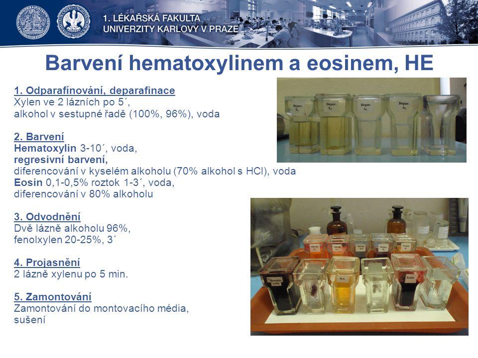 Barvení hematoxylinem a eosinem, HE