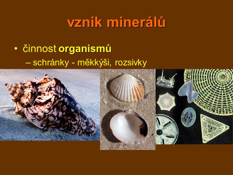 vznik minerálů činnost organismů schránky - měkkýši, rozsivky