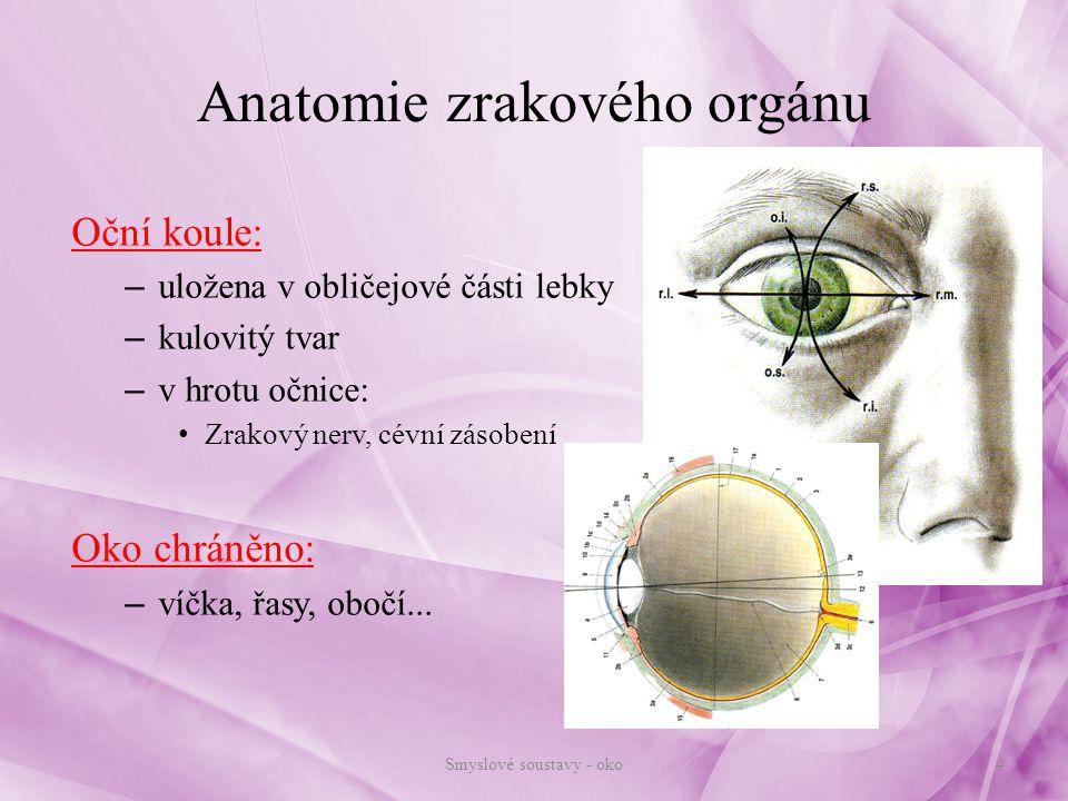Anatomie zrakového orgánu
