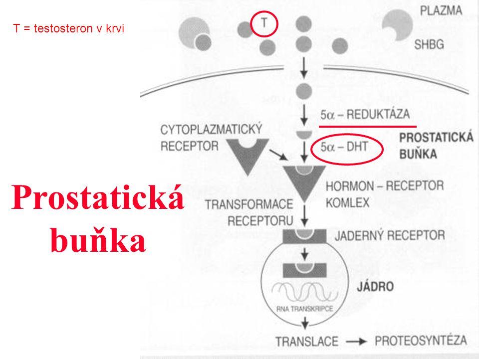 T = testosteron v krvi Prostatická buňka