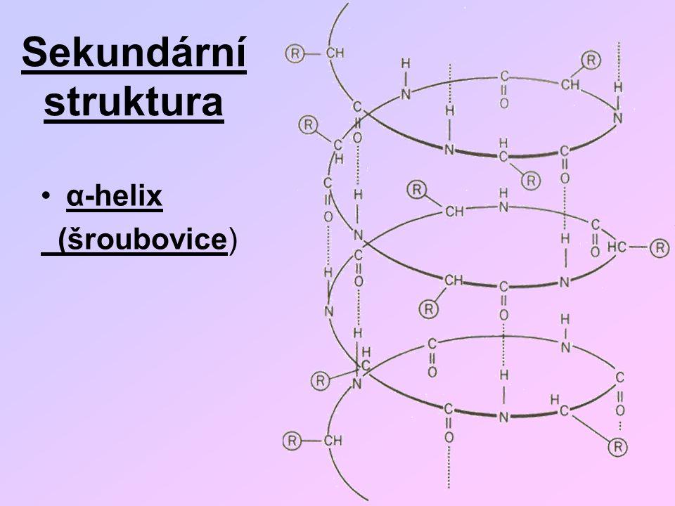 Sekundární struktura α-helix (šroubovice)