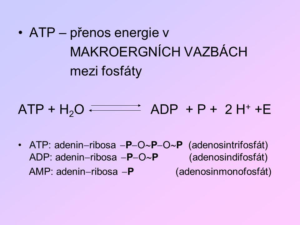 ATP – přenos energie v MAKROERGNÍCH VAZBÁCH mezi fosfáty