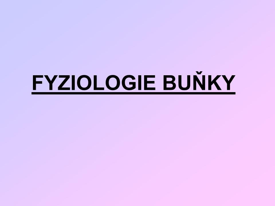 FYZIOLOGIE BUŇKY