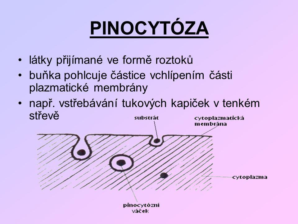 PINOCYTÓZA látky přijímané ve formě roztoků
