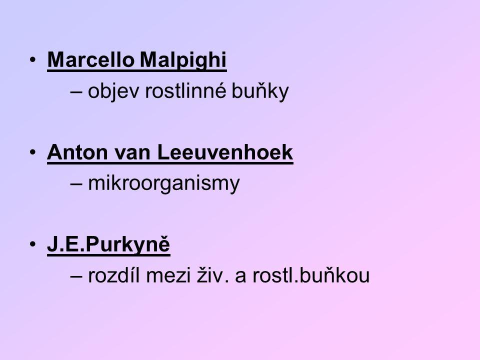 Marcello Malpighi – objev rostlinné buňky. Anton van Leeuvenhoek. – mikroorganismy. J.E.Purkyně.