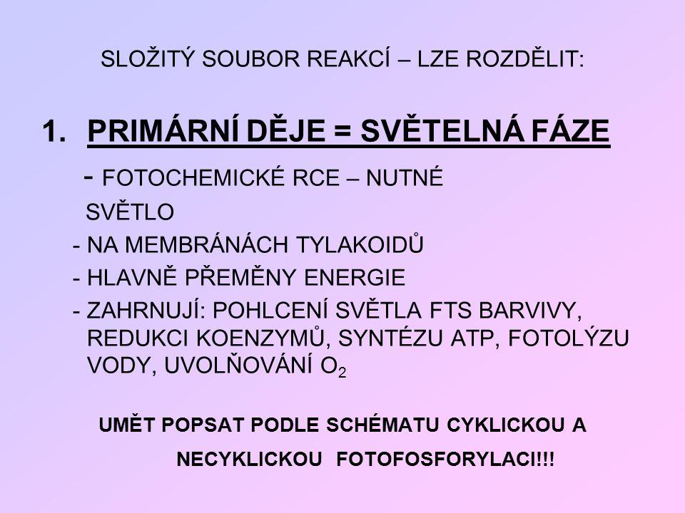 UMĚT POPSAT PODLE SCHÉMATU CYKLICKOU A NECYKLICKOU FOTOFOSFORYLACI!!!
