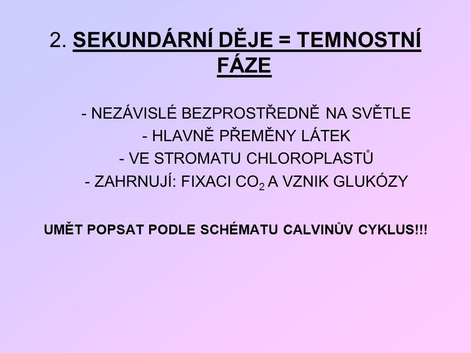 UMĚT POPSAT PODLE SCHÉMATU CALVINŮV CYKLUS!!!