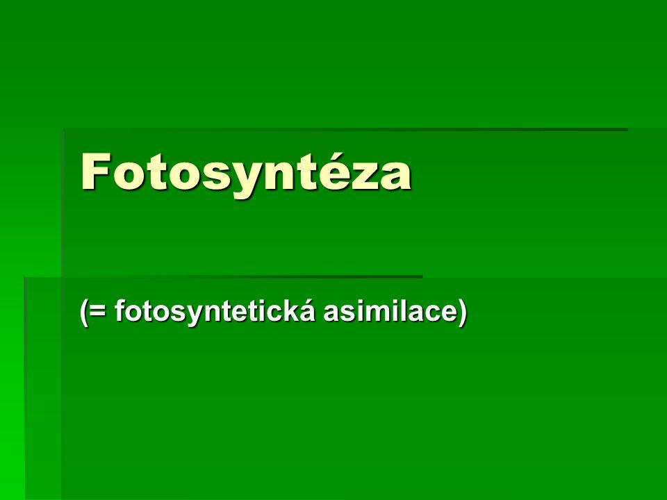 (= fotosyntetická asimilace)