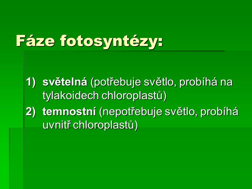 Fáze fotosyntézy: světelná (potřebuje světlo, probíhá na tylakoidech chloroplastů) temnostní (nepotřebuje světlo, probíhá uvnitř chloroplastů)