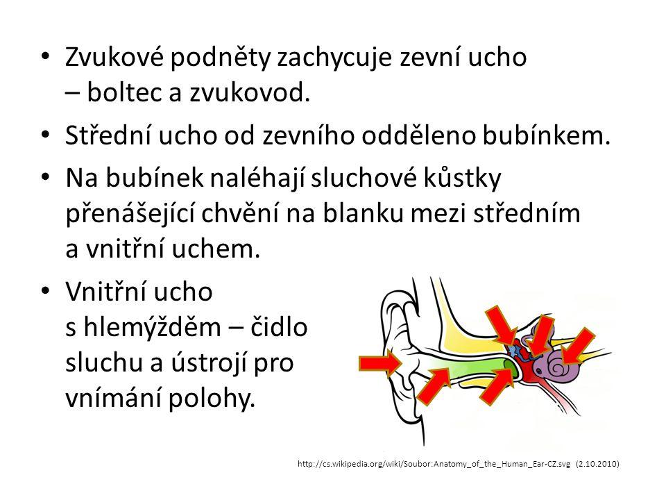 Zvukové podněty zachycuje zevní ucho – boltec a zvukovod.
