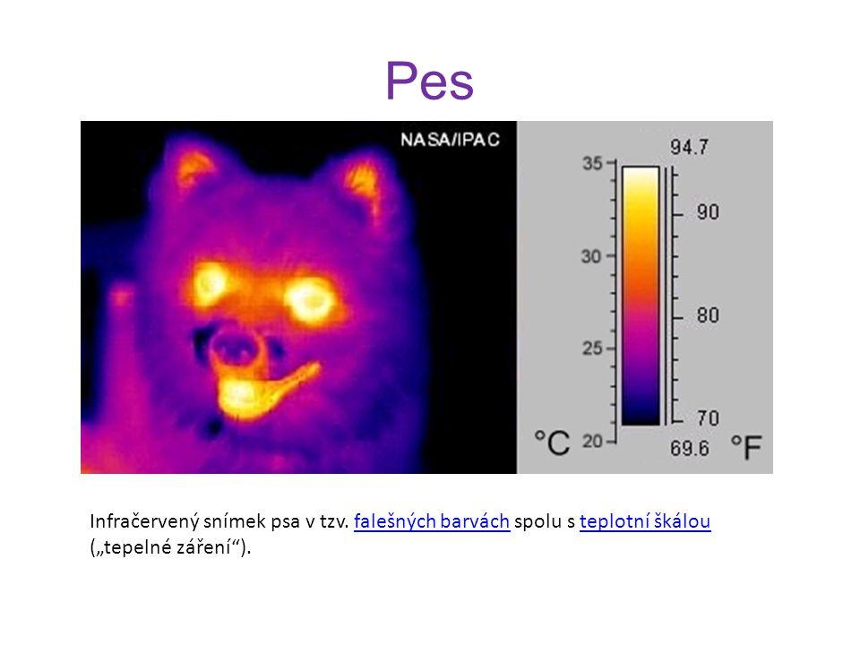 """Pes Infračervený snímek psa v tzv. falešných barvách spolu s teplotní škálou (""""tepelné záření )."""