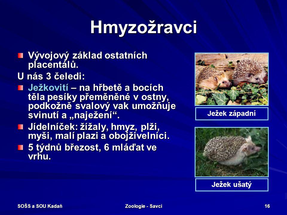Hmyzožravci Vývojový základ ostatních placentálů. U nás 3 čeledi: