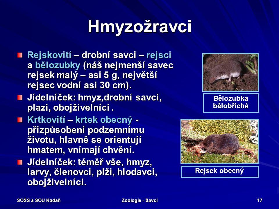 Hmyzožravci Rejskovití – drobní savci – rejsci a bělozubky (náš nejmenší savec rejsek malý – asi 5 g, největší rejsec vodní asi 30 cm).