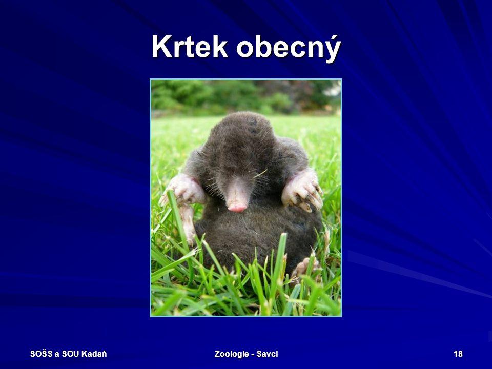 Krtek obecný SOŠS a SOU Kadaň Zoologie - Savci