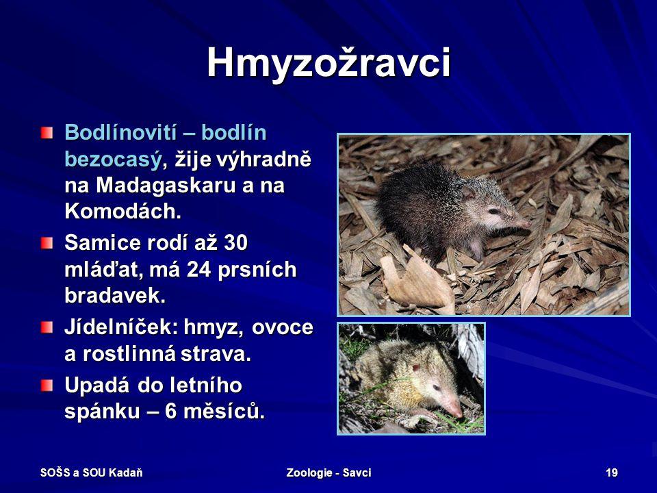 Hmyzožravci Bodlínovití – bodlín bezocasý, žije výhradně na Madagaskaru a na Komodách. Samice rodí až 30 mláďat, má 24 prsních bradavek.