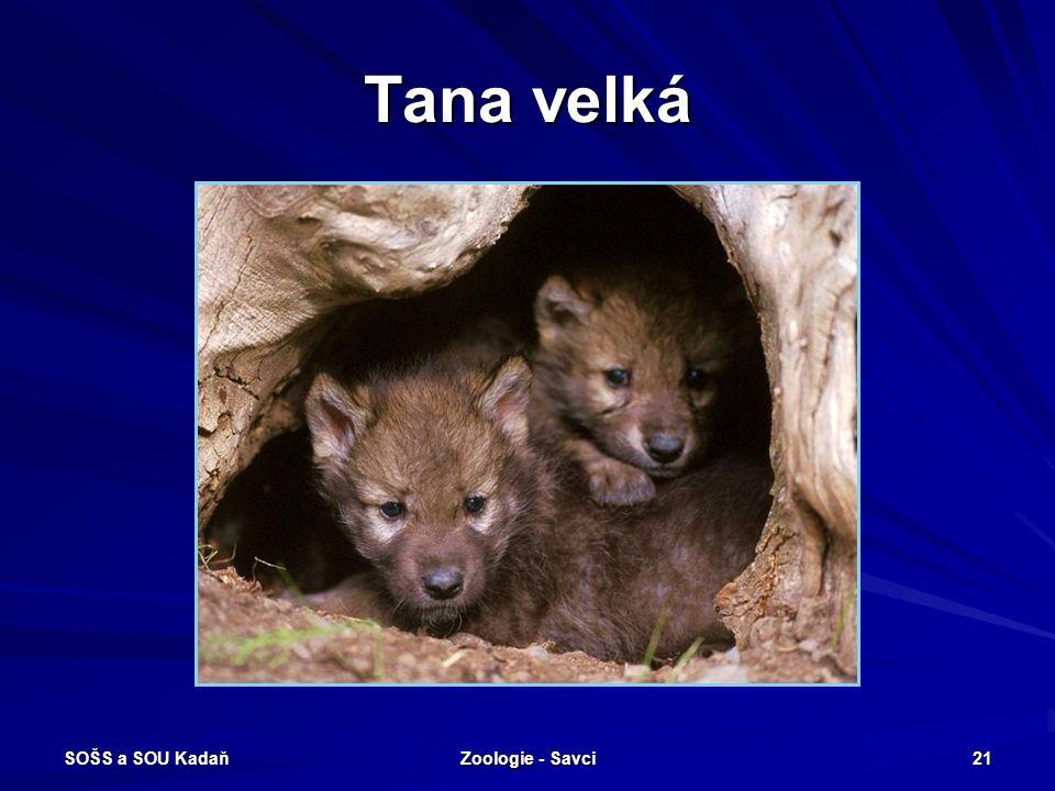 Tana velká SOŠS a SOU Kadaň Zoologie - Savci