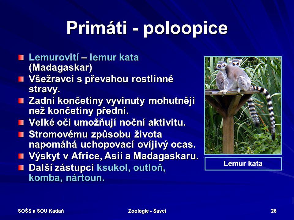 Primáti - poloopice Lemurovití – lemur kata (Madagaskar)
