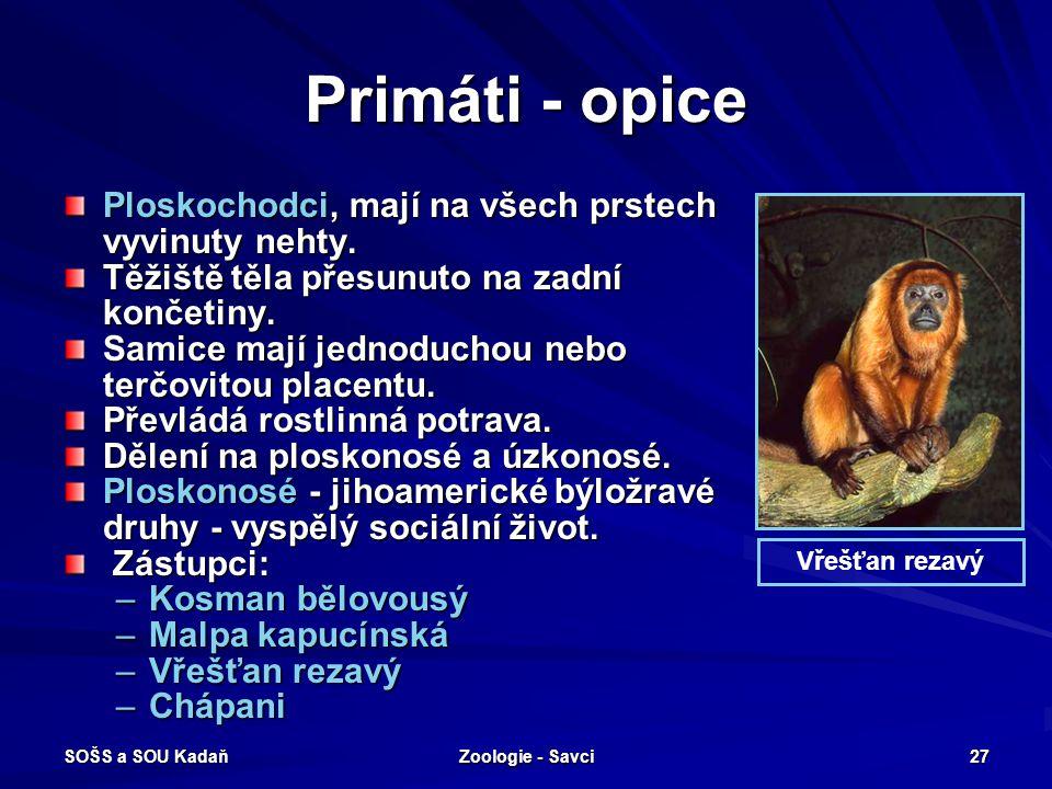 Primáti - opice Ploskochodci, mají na všech prstech vyvinuty nehty.